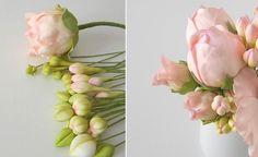 peony buds by Petal Sweet
