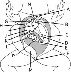 Inside frog labeled diagram electrical drawing wiring diagram frog anatomy labeling biology rhetoric stage pinterest frogs rh pinterest com frog heart diagram frog organs labeled ccuart Gallery
