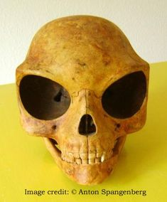 Radiocarbon dating is nuttig voor dating dinosaurus fossielen