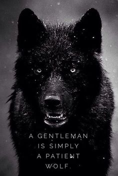 Funny pictures about Truth About Guys Who Call Themselves A Gentleman. Oh, and cool pics about Truth About Guys Who Call Themselves A Gentleman. Also, Truth About Guys Who Call Themselves A Gentleman photos. Wisdom Quotes, Quotes To Live By, Lone Wolf Quotes, Wolf Qoutes, Little Bird Tattoos, Motivational Quotes, Inspirational Quotes, Wolf Spirit, Spirit Animal