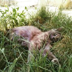 Mon petit chat Furygan qui me manque 💔