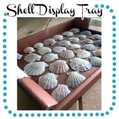Shell Crafts Continued: Shell Display Tray