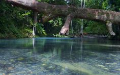 Home of the world's oldest surviving rainforest with egs of plants that existed millions of yrs ago - Daintree, QLD