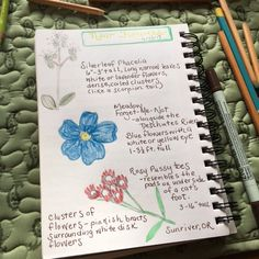 New Oregon wildflower nature journal page