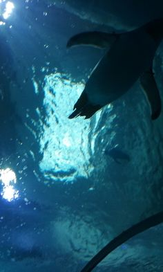 Family Travel to Polk Penguin Conservation Center at the Detroit Zoo