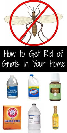 69 Best How To Get Rid Of Gnats Images In 2016 Gardens