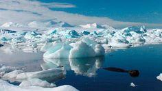 Hayan una extraña forma de vida de origen desconocido en la Antártica - http://www.infouno.cl/hayan-una-extrana-forma-de-vida-de-origen-desconocido-en-la-antartica/