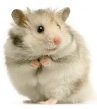 hamster... up to something...
