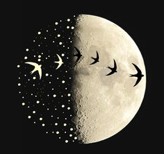 María León ~ Moonwatching: study of the nocturnal migration of birds across the lunar disk