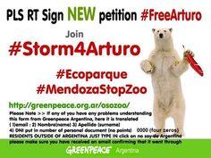 Embedded image permalink. @NoCircusAnimals Pls sign/RT NEW petition 4Arturo http://greenpeace.org.ar/osozoo/ & watch https://www.youtube.com/watch?v=PlKT_NZuOiU … pic.twitter.com/0UtsMbM5zq #Storm4Arturo