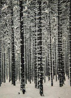 Albert Renger-Patzsch, Mountain Forest in Winter, 1926 - i love tree pics. Albert Renger Patzsch, Winter Forest, Snow Forest, Winter Snow, All Nature, Winter Beauty, Museum, Land Art, Winter Scenes