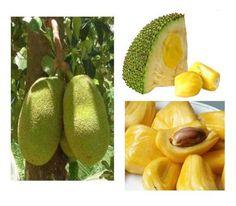 Jack fruit, so delicious, tastes like tutti frutti laces!