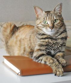 """FOR MEOW EYES ONLY ~ """"Sorry, dude, a cat's diary is not meant for human eyes. Just trust me on this."""""""