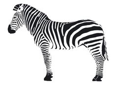Illustration about Black and white illustration. Zebra consist from black stripes. Illustration of shape, zebra, mane - 20235733 Zebra Kunst, Zebra Art, Zebra Painting, Zebra Illustration, Black And White Illustration, Zebra Clipart, Zebra Drawing, Cat Coloring Page, Clipart Black And White