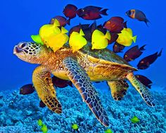 sea turtle and fish friends photo by Ken Hopper Google+
