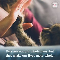 Pets make our lives more whole in so many different ways! What's your favourite thing about your pet? #pets #love #cats #paws #home #sanfrancisco #sfhomes #animals