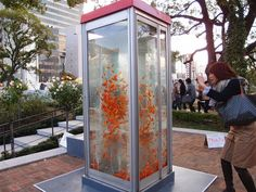These days telephone booths are pretty much obsolete. Instead of letting them slowly decay on the city sidewalks, an artist collaborative called Kingyobu in Osaka is converting them into giant goldfish aquariums. The shimmery orange fish is somewhat of a good luck charm in Japan, so visitors crowd around the awesome tanks and get their luck and happiness fill