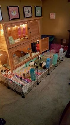trendy ideas for pet bunny diy cage guinea pigs Diy Guinea Pig Cage, Guinea Pig Hutch, Guinea Pig House, Cages For Guinea Pigs, Diy Guinea Pig Toys, Caring For Guinea Pigs, Diy Rat Toys, Guinea Pig Costumes, Bunny Hutch