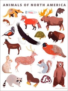 Animals of North America - Animals Posters That Stick | Oopsy daisy
