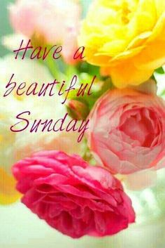 Have a beautiful Sunday Flowers Quote good morning sunday sunday quotes good morning quotes happy sunday sunday quote happy sunday quotes good morning sunday beautiful sunday quotes sunday quotes for friends and family