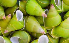 green snail shells