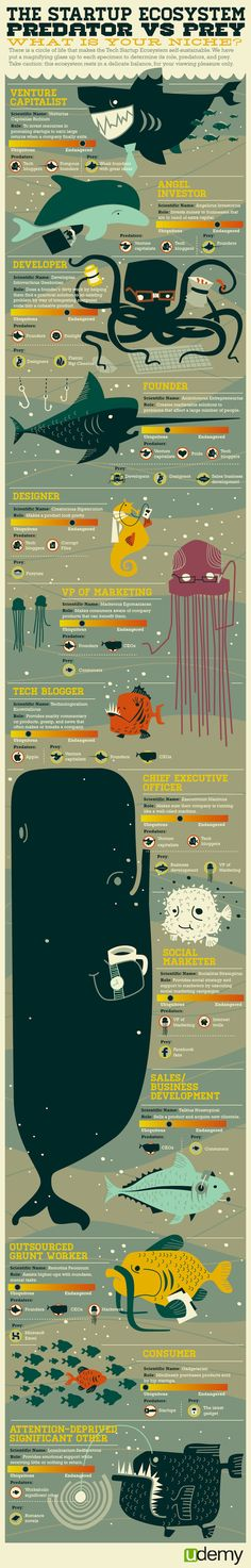 The Startups Ecosystem Predator vs Prey What is your niche?