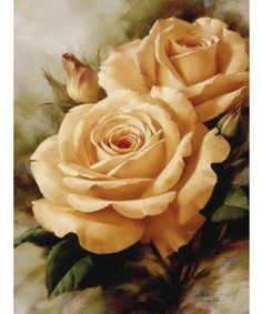 Igor Levashov, Orange Roses