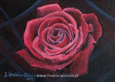 Róża 18x24cm akryl płótno, rose
