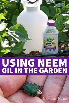Neem oil is a great organic pesticide that you can use to keep the bugs away in an organic garden. Learn more about the benefits of neem oil and how to use it in the vegetable garden. Vegetable Garden, Garden Plants, Neem Oil, Oil Uses, Edible Garden, Pest Control, Fungi, Compost, Being Used