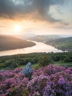Bamford Edge Heather, Peak District | England (by Uldis K)