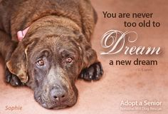 Senior dogs deserve extra care. They should be rewarded for keeping us company all those years. To get rid of them because they are old is despicable.