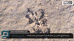 مصر العربية |#شاهد| محمية #التجمع_الخامس من هياكل أفيال ودنياصورات إلى اهمال وقمامة