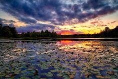 Lily Pad Sunset | Jeff Sinon Photography