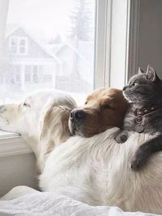 A cold day outside. A warming of hearts on the inside. I #fortheloveofdog