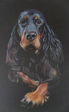 Handsome Gordon Setter portrait - Black on Black #blackandtan #gordonsetter #petportrait #dogs