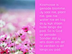 Kosmosse is genade blomme. Jy saai nie, plant nie, gee nie water nie en tog as jy kyk staan hulle langs die pad. Goeie Nag, Goeie More, Scripture Verses, Scriptures, Afrikaans, True Words, Qoutes, Prayers, How Are You Feeling
