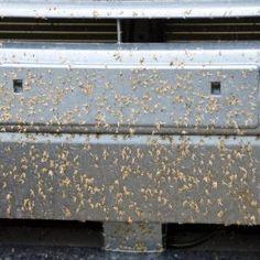 Car Wash New Orleans Bug