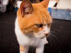 八丈島フィッシングクラブのボス | Flickr - Photo Sharing!