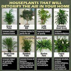 Air detoxing plants