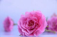 diy - rosas com papel crepom