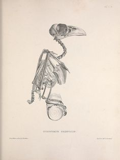 Osteologia avium, or, A sketch of the osteology of birds /. [Wellington] :Published by R. Hobson, Wellington, Salop,1858-1875..