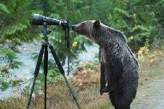 Jim Lawrence, a B.C. photographer captured the moment when a curious grizzly studied his camera equipment.