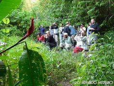 Reserva de Tambopata  La región de Tambopata - Candamo posee varios récords mundiales en flora y fauna de la región: 545 especies de aves en solo 5,500 ha. 1122 especies de mariposas, 151 especies de libélulas, y 29 especies de escarabajos tigre.    En 1996, parte de la zona Reservada Tambopata fue declarada Parque Nacional Bahuaja-Sonene. Esta nueva área protegida que limita con el Parque Nacional Madidi de Bolivia constituye el mayor parque binacional del mundo.