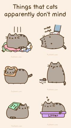 Things that cats apparently don't mind