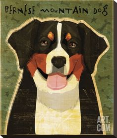 Bernese Mountain Dog Stretched Canvas Print by John Golden at Art.com
