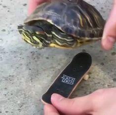 Gotta Go Fast - Funny Animal Videos - Animals Cute Funny Animals, Cute Baby Animals, Funny Cute, Animals And Pets, Cute Animal Videos, Funny Animal Pictures, Cute Turtles, Funny Cat Videos, Animal Memes