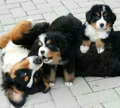 Playtime for Berners