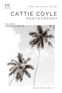 Shop art prints by color! Find the perfect hue to match your decor or add a pop of color. Which one is your favorite? Classic black and white, tropical turquoise, calming blue, soothing green, minimalist monochrome, elegant earth tones... See them all here --> Coastal Wall Decor, Coastal Art, White Photography, Fine Art Photography, Palm Tree Art, Shop Art, Black And White Abstract, House Art, Print Store