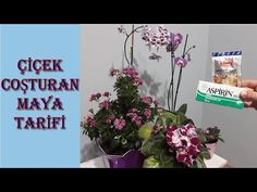 flower food with dry yeast, natural plant food