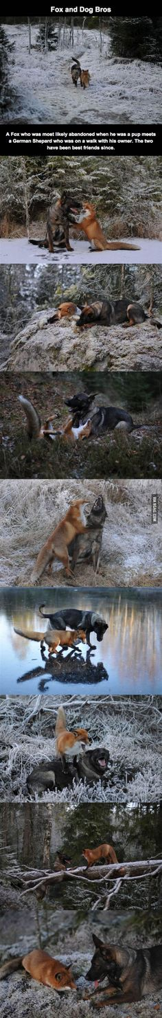 Fox and Dog best bros - They met in a forest when fox was just a pup and have been best bros ever since.